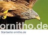 logo_ornitho_de_200px