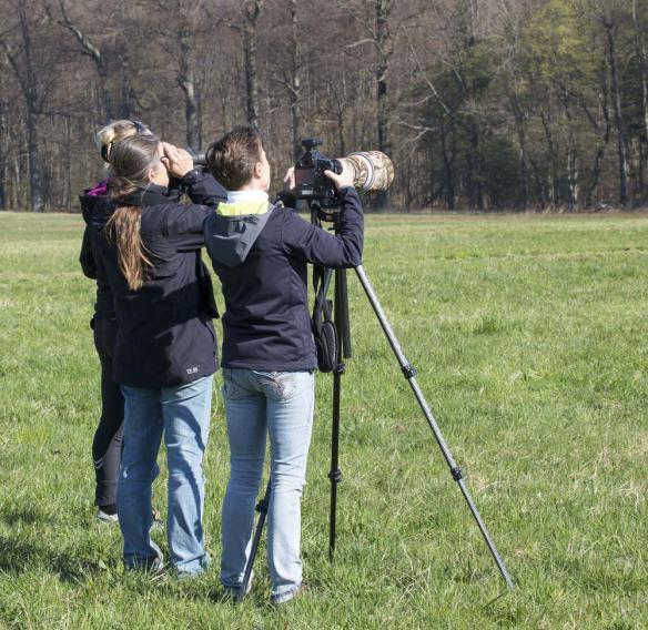 Vogelbeobachtungen-29-03-14