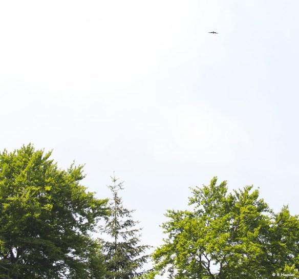 15-05-21-Rotmilan-ueberfliegt-Waldgebiet
