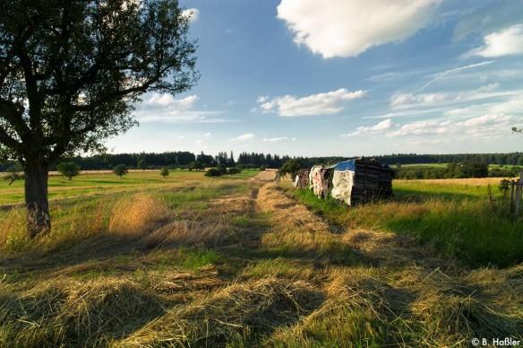 Streuobstwiesen-Völkersbach